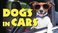 Dogs in Cars by Jack Russell