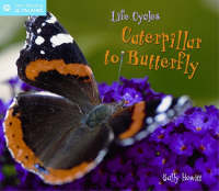 Life Cycles From Caterpillar to Butterfly by Sally Hewitt