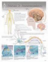 Neurons & Neurotransmitters by Scientific Publishing