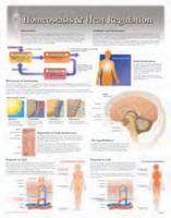 Homeostatis & Heat Regulation by Scientific Publishing