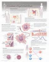 Human Reproduction by Scientific Publishing