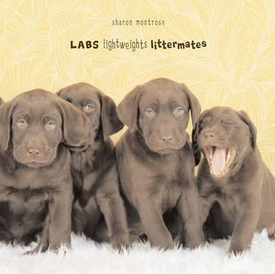 Labs Lightweights--Littermates by Sharon Montrose