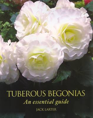 Tuberous Begonias An Essential Guide by Jack Larter