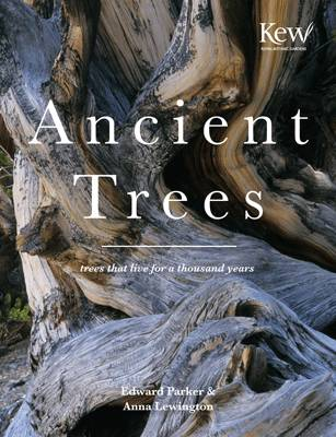 Ancient Trees Trees That Live for a Thousand Years by Anna Lewington