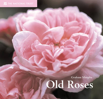 Old Roses by Graham Murphy