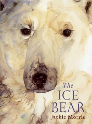 The Ice Bear by Jackie Morris